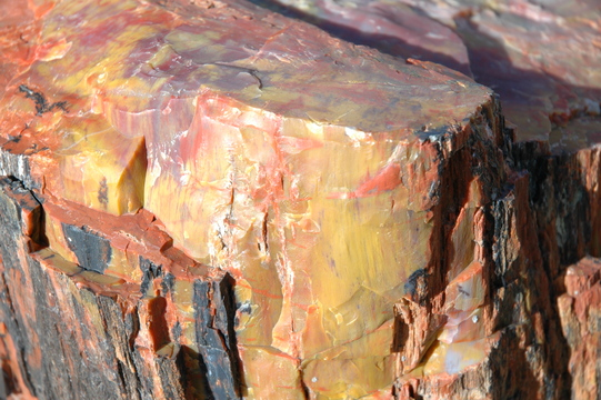 Petrified wood at Petrified Forest National Park, Arizona.