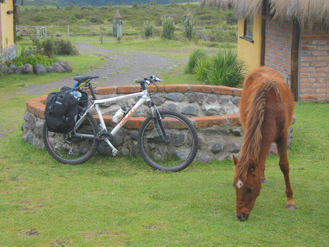 Working animals are part of the scenery in Ecuador, such as this horse grazing next to one of our bikes.