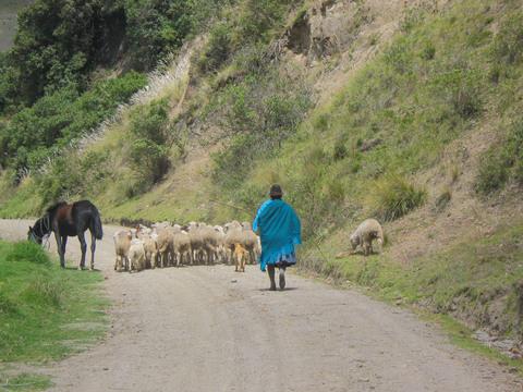 More shepherding.