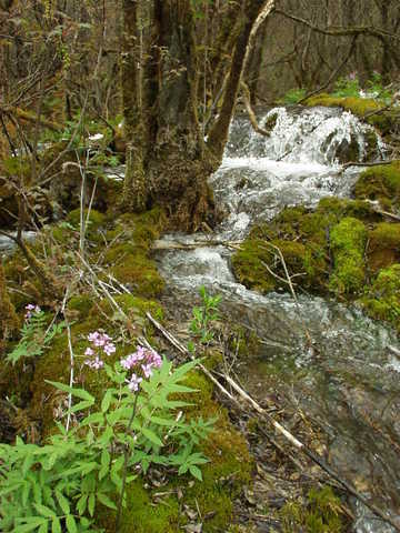 Trees and flowers in a stream.