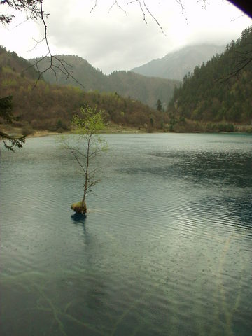 Small tree growing in the middle of a lake, Jiuzhaigou.