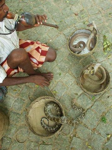 Snake Charmer in Fort Cochin, Kerala.