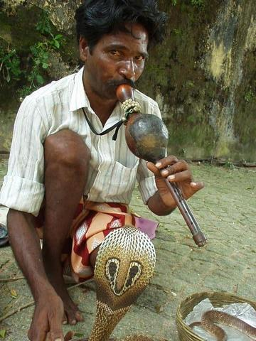 Snake charmer in Fort Cochin, India.