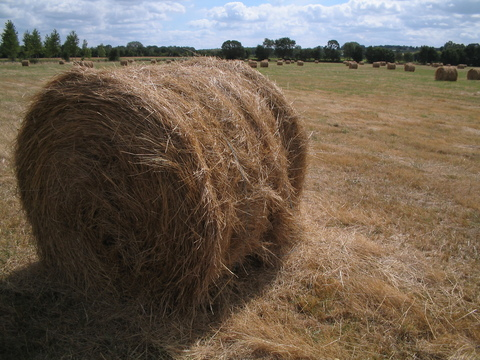 A very common sight on my trip, the French hay bale.