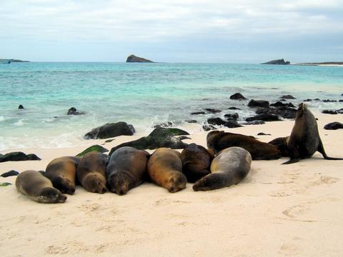 Family beach gathering.