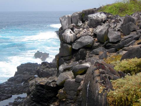 Carefully hidden marine iguanas.