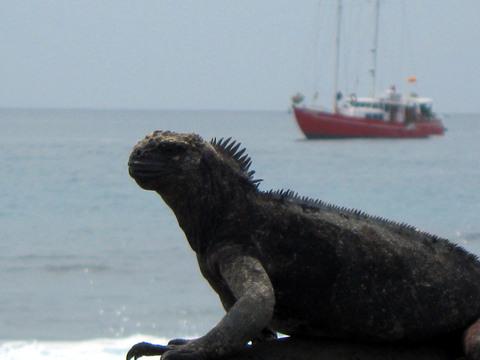 Marine iguana + encantada.