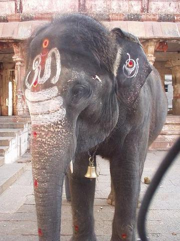 The elephant of the Virupaksha temple.