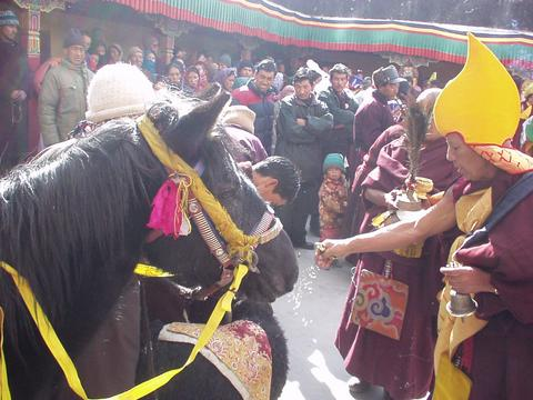 Ladakhi monk blessing animals at the 2003 Spituk festival.