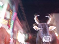 Bull walking down the street, Madurai.