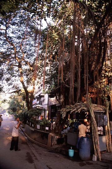 Sugar cane juice stand, Mumbai.