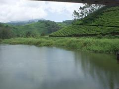 Tea with lake in foreground, Munnar.