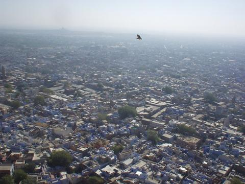Hawk soaring over the blue city of Jodhpur.