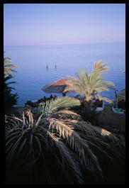 dahab_from_the_penguin