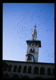 umayyad_mosque_birds